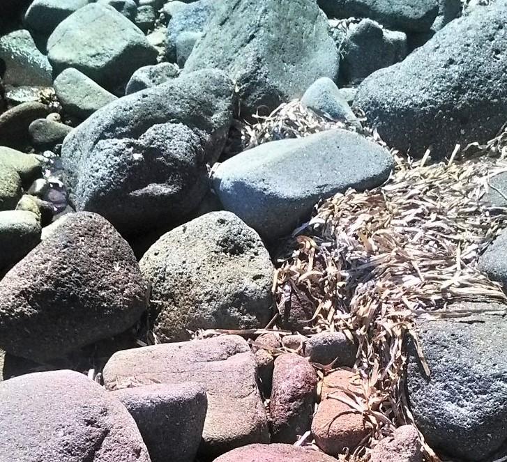 pietre-e-alghe-di-mare
